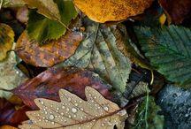 Folhas (paz natura)