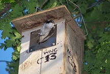 Make Nesting Boxes
