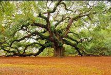 Trees are treasures