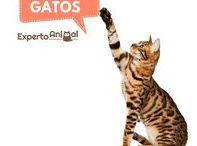 Mundo felino: ¡Gatos! / Se dice de ellos que son son independientes y poco cariñosos pero los cierto es que los gatos son unas mascotas adorables y el mundo felino está lleno de curiosidades y extraordinarias imagenes. Descubre todo sobre el mundo de los gatos con ExpertoAnimal. #ExpertoAnimal #MundoAnimal #ReinoAnimal #Animales #Naturaleza #Gatos #Felinos #Gatitos #Mascotas