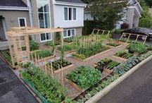 Gardening: Raised Beds