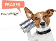 Frases de animales / Con este tablero de ExpertoAnimal te ofrecemos toda una variedad de frases de animales, graciosas, de amor, de amistad, frases de gatos, de perros y de todas las especies que forman el reino animal para que muestres a todos lo mucho que adoras a tu peludo. Así mismo, compartimos curiosidades de los animales, trucos y tips que todo amante de ellos debe conocer. #FrasesAnimales #FrasesAnimalesGraciosas #FrasesAnimalesdeAmor #FrasesdeGatos #FrasesdePerros #CuriosidadesAnimales