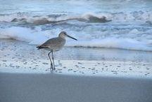 Brevard Beach Life / Along the sands of beautiful Brevard County beaches