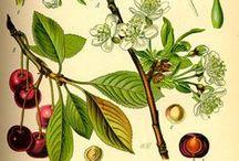 botanika és egyéb érdekességek