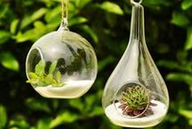 glass planters / glass indoor planters **collection by the planter pod**