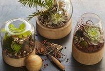 terrarium planters / terrarium indoor planters **collection by the planter pod**