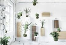 grouped planters / groups of indoor planters **collection by the planter pod**