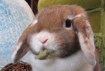 Bunnies World / kaninchen