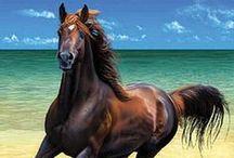 My Horses!