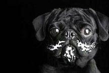 Pugs & Bulldog