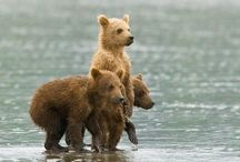 Silly Ol' Bear...and a few friends / by Lucy Funk