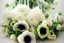 Floral / treat me