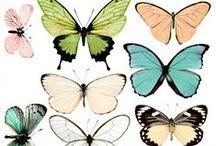 motyle/butterfly