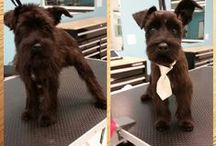 Before & Afters / Before and after grooming pictures