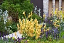 CHELSEA FLOWER SHOW & competitions