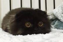 fluffy + chubby