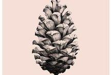 ▸ DIY   Pinecones / אצטרובלים עם ריח של אורנים מזכירים לי ילדות. כאן אני אוספת רעיונות לשימוש ומיחזור