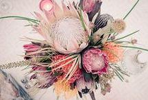 Ramos de novia / Wedding bouquet