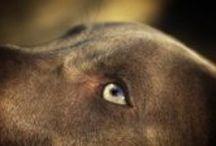 Mascotas / Esos animalitos que tanto queremos!! Son como de la familia...
