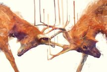 Stags  / by Tracy Jones