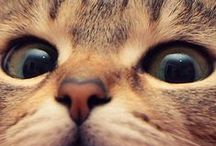 Cats on the mats / A collection of beautiful, funny and endearing cats