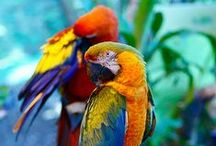 The Beauty of Parrots / A collection of beautiful, colourful parrots