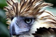 The Majesty of Birds of Prey / A collection of birds of prey from all over the world.