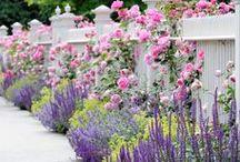 virágos kertek - flower garden
