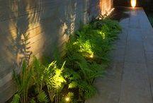 fények a kertben - lights in the garden