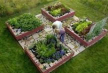 zöldséges és fűszer kertek - vegetable and herb garden