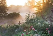 reggel a kertben - morning in the garden