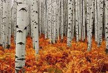 évszakok - ősz - autumn garden
