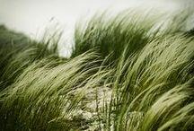 szeles napok - breezy days