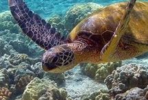 The Beauty of the Ocean / All about the ocean and the creatures that live in it.