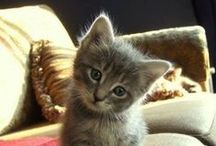 PET: Gatitos, perritos, etc