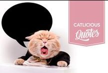 Catlicious Quotes