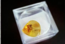Vivah Amber / Hand Selected Baltic #Amber pieces.