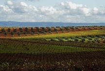 Paisajes Ruta del Vino Ribera del Guadiana