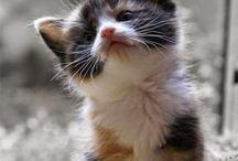 kitties. / happiness