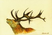 The 'Hart' / A 'Hart' is actually a five year old red stag deer. Little known fact, but the emblem which has come to represent our area made up of #Blackwater&Hawley #Bramshill #ChurchCrookham #Crondall #CrookhamVillage #Dogmersfield #ElvethamHeath #Eversley #Ewshot #Fleet #Greywell #HartleyWintney #Heckfield #Hook #LongSutton #Mattingley #Odiham #Rotherwick #SouthWarnborough #Winchfield & #Yateley