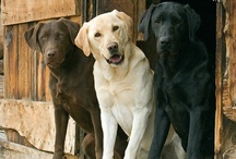 Animals - All about Dogs!!! / by Sarah Radtke