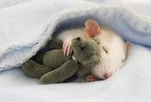 Sleepy things.Sweet dreams.