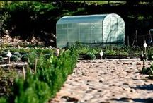Urban Freedom Greenhouses / Our greenhouses are affordable, efficient, water-wise and perfect for South Africa's challenging growing conditions (sandy soil, wind and dry heat).  This is an album to show what they look like.
