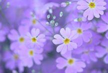flowers  / Ne diyim ki , Çok güzeller ..