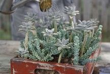 Χαριτωμένοι κήποι / garden miniature garden