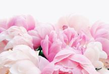 Flowers & Phrases.