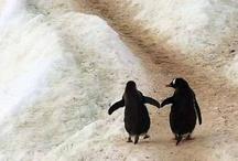 For the Love of Penguins / PenguinArt.com *wonk*