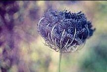 Flowers♥