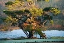 Decor : Tree Houses