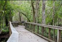 Parks in St. Pete/Clearwater / If you're looking to see Florida – the natural way – on your next vacation, the St. Petersburg/Clearwater area offers one great choice after another. The beaches and parks combine with the climate to draw visitors year round.